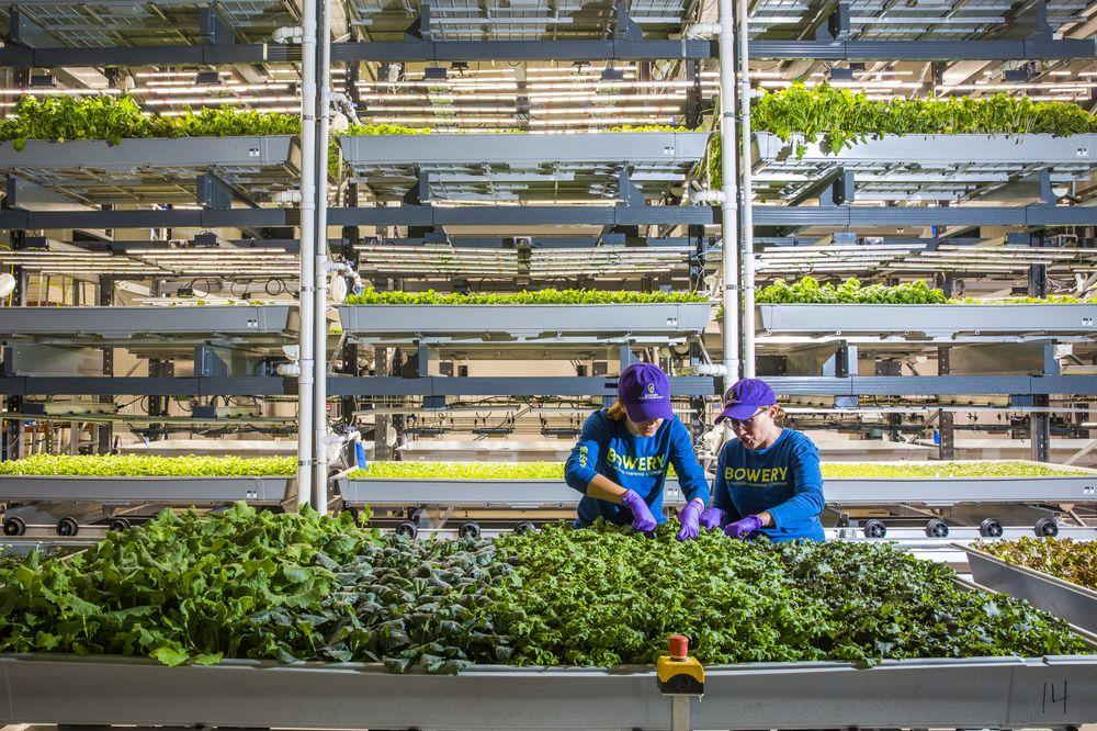 سرمایه گذاری گوگل ونچرز در استارتاپ کشاورزی عمودی