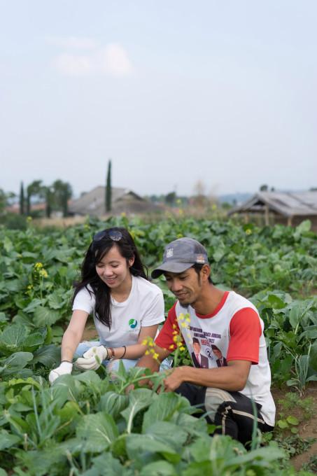 استارتاپ توزیع محصولات کشاورزی